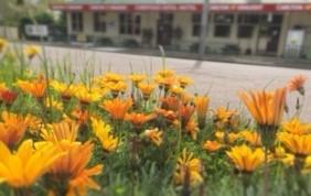 spring-at-corryong
